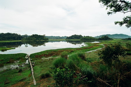 A view of the Cat Tien National Park, where two planned controversial dams, if built, would totally alter the marine environment in the 72,000-hectare park, which straddles Dong Nai, Binh Phuoc and Lam Dong provinces.