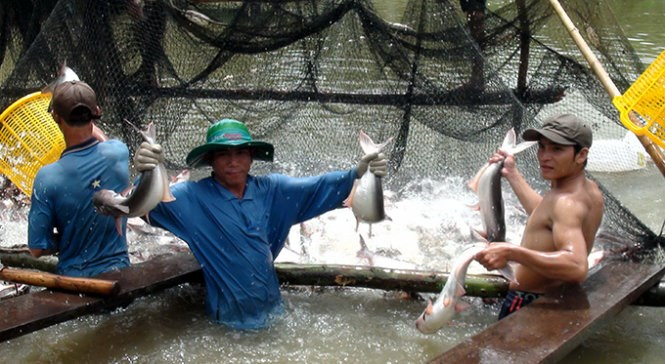 A fish farm on the Mekong River in Vietnam (Photo: Tuoi Tre)